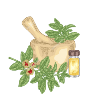 Praxom Mountfresh Honey 1 Kg